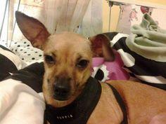 Four paws rescue of connecticut inc missing dog putnam escaped