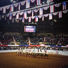 Fort Worth Stock Show and Rodeo Fort Worth Stock Show, Show Cattle, Show Horses, Rodeo, Texas, Events, Show Cows, Race Horses, Texas Travel