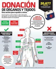 Conoce qué es y cómo se lleva a cabo la donación de órganos, un acto que salva o mejora la calidad de vida de quienes esperan un trasplante. #Infographic
