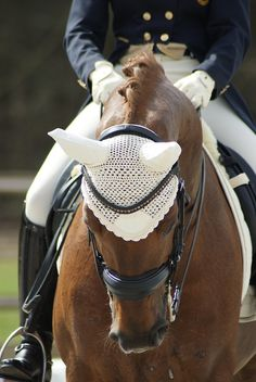 dressageatschool:    hunterjumpersismylife:    horsesinthering:    George today    I'm in love with that bonnet    Not usually a fan of bonnets in competition that don't match the horse's colour (Because I find it tends to highlight any unsteadiness of the head) but I looooove this one. I also love that everything is cream and matches.