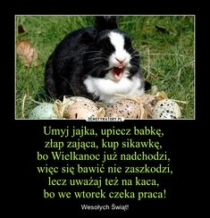 Umyj jajka, upiecz babkę,  złap zająca, kup sikawkę,  bo Wielkanoc już nadchodzi,  więc się bawić nie zaszkodzi, lecz uważaj też na kaca,  bo we wtorek czeka praca! – Wesołych Świąt! Usmc, Haha, Jokes, Good Things, Cool Stuff, Funny, Animals, Instagram, Animales