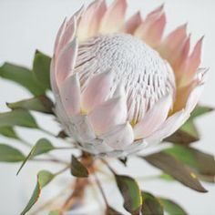 Our round-up of the 3 trendiest and fantastic flowers for your S/S 2013 wedding! {Photo via SD Wedding Style}