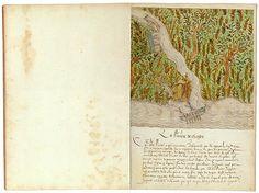 The Morgan Library & Museum Online Exhibitions - Histoire Naturelle des Indes - La Riviere De Chage (The Chagres River)