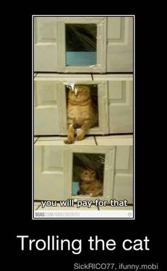 Haha the messing with the cat..... good times