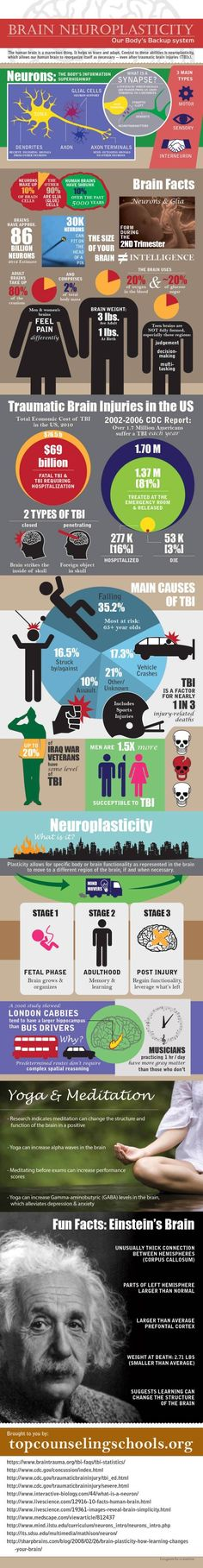 BRAIN NEUROPLASTICITY: Our body's backup system - actually infographic more about brain facts - but still interesting