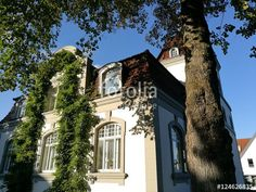 Alter Lindenbaum vor einer begrünten Fassade einer alten Villa in Oerlinghausen bei Bielefeld im Teutoburger Wald in Ostwestfalen-Lippe