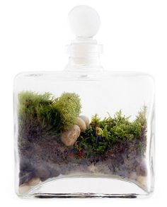 """DIY TERRARIUM :: Another cool DIY terrarium idea! (This Explorer Terrarium retails for $35!). A 7""""x5"""" bottle w/ glass stopper is used (any glass bottle w/ a cork works fine!) & is filled with stones, soil, moss & a little plastic figurine. A stick is used to place items in through the narrow bottle neck. Keep out of direct sun & lightly mist every 2-4 wks! I'd use distilled water to avoid mineral build up or water spots & sprinkle a bit of activated charcoal below the soil to keep it fresh!"""