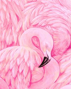 Flamingo Detail