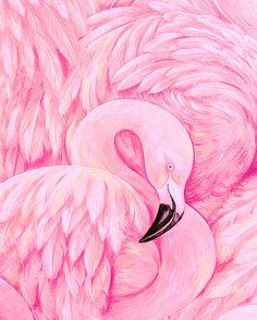 Flamingo Detail