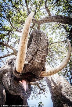 Wild Animals Photography, Elephant Photography, Wildlife Photography, Photography 101, Wild Elephant, Indian Elephant, Elephant Love, Elephants Never Forget, Save The Elephants
