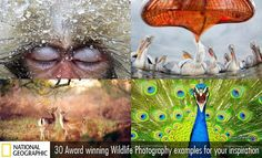 30 Award Winning Wild life Photography examples for your inspiration. Read full article: http://webneel.com/best-award-winning-wildlife-photography-inspiration | more http://webneel.com/wild-life | Follow us www.pinterest.com/webneel