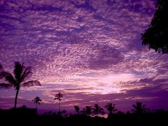It's a snap!Purple haze of Maui,hungry pelicans, and Chinese maidens - TODAY.com