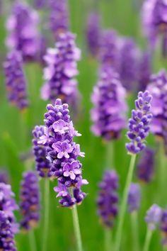 The Best Herbs and Medicinal Plants to Grow in Your Home This Spring Grow Home, Medicinal Plants, Growing Plants, Plant Decor, Herb Garden, Indoor Plants, Planting, Benefit, Medicine