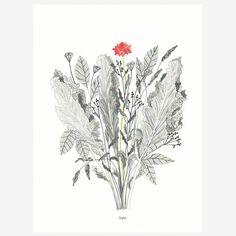ilustración flores, print flores, lámina floral, dibujo botánico, ilustración botánica, dibujo tinta y lápiz, print naturaleza, print planta