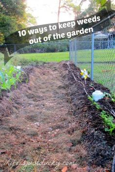 The Homestead Survival | 10 Ways To Keep Weeds Out of Your Garden | Gardening http://thehomesteadsurvival.com