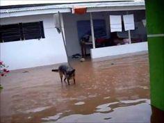 Bostaço: Enchente - Humor embaixo d'agua
