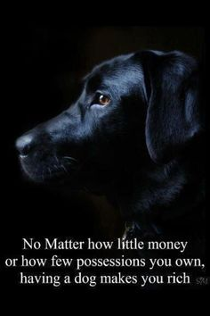 EVERYBODY NEEDS A DOG