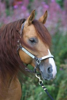 pretty profile on this horse