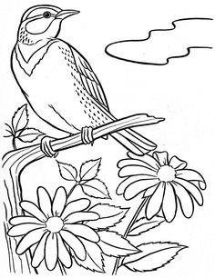 Coloring Book~Springtime Welcome - Bonnie Jones - Álbuns da web do Picasa Bird Coloring Pages, Adult Coloring Pages, Coloring Books, Wood Burning Patterns, Wood Burning Art, Outline Drawings, Bird Drawings, Bird Embroidery, Embroidery Patterns