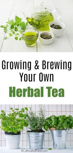 Herbs Gardening How To Grow An Herbal Tea Garden- Love herb tea? See how simple it can be to grow your own herbal tea garden! First, let's look at the types of herbs ideal for tea making