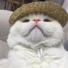 with kitty's pink mouth Animals And Pets, Baby Animals, Funny Animals, Cute Animals, Cool Cats, I Love Cats, Cat Aesthetic, Cute Creatures, Cat Breeds