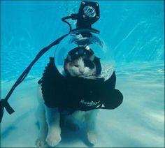 cat scuba diving!!!!!