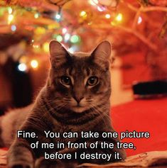 20 Funny Animal Pics for Your Thursday | We love cute photos of cats, dogs, horses, pigs, cows, lions, and tigers, and bears… OH MY!