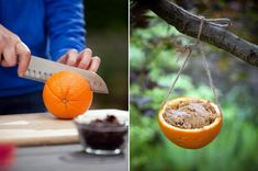Weekend Projects: Easy-peasy Diy Natural Bird Feeders — Roundup