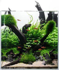 10 Tips on Designing a Freshwater Nature Aquarium Planted Aquarium, Freshwater Aquarium Plants, Betta Aquarium, Tropical Fish Aquarium, Tropical Fish Tanks, Freshwater Fish, Betta Fish, Aquarium Landscape, Nature Aquarium