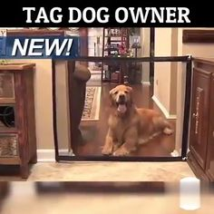 Every dog owner should have this magic gate Install in seconds! This safe gate is the easiest & most discrete way to protect pets all around the house! No nails no screws and no damage. Grab yours off today only! Tap the link in bio to get yours Dog Accesories, Pet Accessories, Animals Tattoo, Pet Gate, Dog Rooms, Cute Funny Animals, Pet Beds, Dog Houses, Dog Care