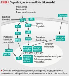 Kemoterapi och målstyrda läkemedel kan förstärka varandra