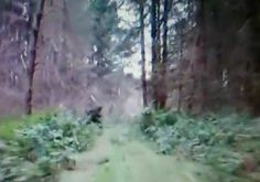 Woman Claims Bigfoot Caused Car Crash #Bigfoot