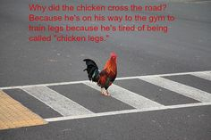 Why Did The Chicken Cross The Road According To Famous Historical Figures Funny Images, Funny Pictures, Funny Pics, Bodybuilding Humor, Famous Historical Figures, Fun Learning, The Funny, Animals, Chicken