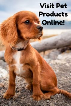 Visit Pet Products Online to browse my favourite pet products and pet supplies available online through Amazon.!