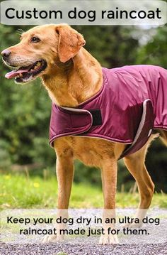 Not every dog needs a raincoat, but some do. Is yours one of them? That's going to depend on several factors. The place you live, what you do with your dog, and their characteristics can be factors in your decision about getting or not getting a raincoat. Dog Smells, Dog Raincoat, Dog Coats, Stay Warm, Factors, Life Is Good, Best Friends, Live, Dogs