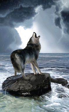 the wolf within _ I love this! _Wolf gif ..wait for it..!!