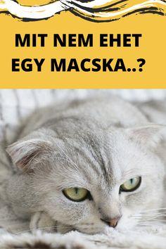 Macska etetése | Cica etetése | Macska etetés | Cica etetés | Macskaeledel | Cicaeledel | Macskatáp | Cicatáp | Macska | Macska képek | Macskák és kiscicák | Macskák vicces | Macskák cuki | Cicák | Cicák cuki | Cicák vicces | Macskás idézetek | Macskás viccek | Macskás képek | Cicás képek | Macska idézetek | Macska idézet | Macska illusztráció | Idézetek macska | Macskás idézetek | Vicces macskás idézetek | Cica idézet | Cica idezetek | Cicás idézetek magyarul | Kismacska | Cuki kismacskák | Animals, Animais, Animales, Animaux, Animal Books, Animal
