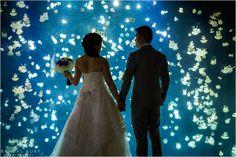 A Vancouver Aquarium Wedding // Cindy & JJ // Vancouver Wedding Photographers-Randal Kurt Photography