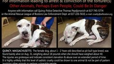 Punish the man responsible for the torture of Puppy Doe - also known as Kiya.PLEASE SIGN THIS PETITION, PLEASE!! IT ONLY TAKES SECONDS>  THANK YOU!!