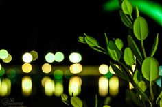 Traveling around Greece and taking photos.One of the most amazing places that you ever been Crete Island Greece, Night Lights, Travel Around, The Good Place, Plant Leaves, Funny, Plants, Funny Parenting, Plant