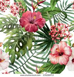 Beautiful Tropical Pink Hibiscus Flowers Floral Curtains by jvande - CafePress Tropical Flowers, Tropical Art, Exotic Flowers, Hawaii Flowers, Tropical Plants, Floral Flowers, Tropical Paintings, Tropical Colors, Tropical Paradise