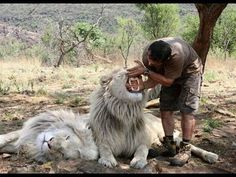 ✺ Kevin Richardson - Book - Part of The Pride - My life amonge the big cats of Africa - YouTube