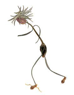 Pressed flower art - Marathon runner - blank greeting card - a digital print created from original art - made of pressed flowers & leaves