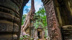 Angkor Wat, Khmer Empire, Professional Photography, Capital City, Real People, Royalty Free Photos, Abandoned, Science, Ta Prohm