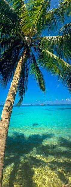 .Paradise found ?