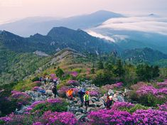 Seoraksan National Park - Google Search