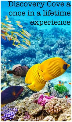 Discovery Cove Prices, Tickets, & Tips for a Once in a Lifetime Experience Orlando Travel, Orlando Vacation, Florida Vacation, Florida Travel, Orlando Florida, Vacation Trips, Travel Usa, Family Vacations, Vacation Ideas