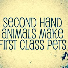 Adopt don't Shop - You'll never regret it <3