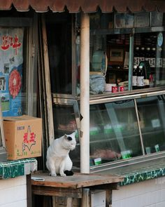 NEKOくらぶ (@nekoclub_jpn) • Photos et vidéos Instagram招きのバイト「お客さんが来ないと、クビになっちゃうよ~」#ねこ #猫 #cat #gato #chat #外猫 #straycat #ねこ部 #ふわもこ部 #猫好きさんと繋がりたい #cutecats #followme  #Regram via @kiyochan_cats Cat Coffee Mug, Cat Mug, Pet Cats, Cats And Kittens, Japanese Cat, Cat Food, Neko, Funny Cats, Cute