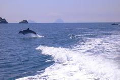 West Cork Dolphins, Ireland